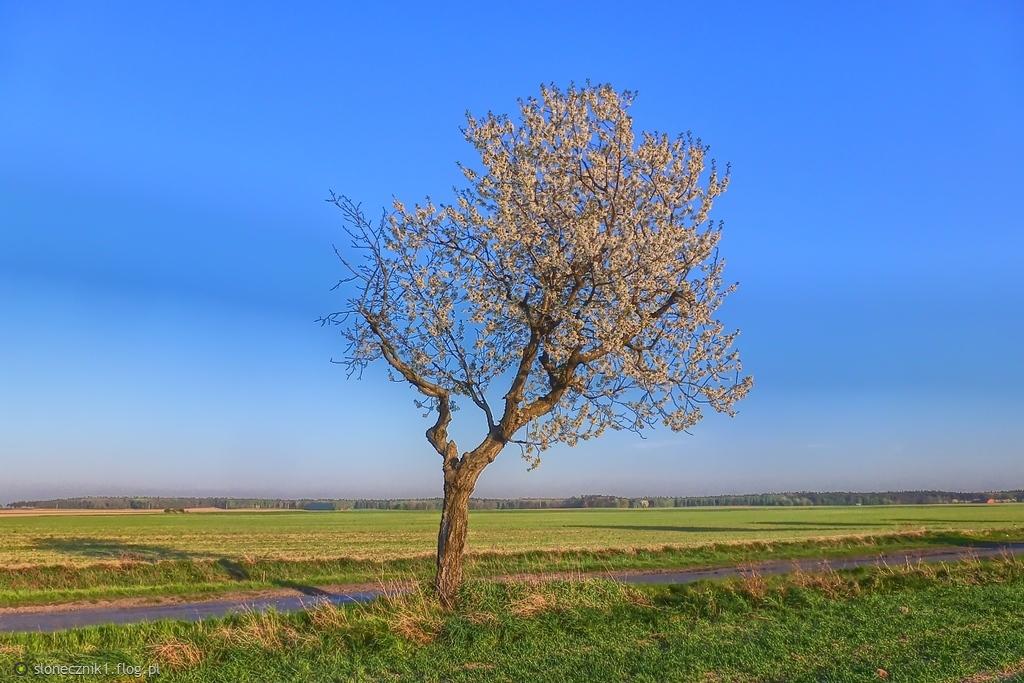 i zieleń ... i błękit ... wiosenny kolorowy świat