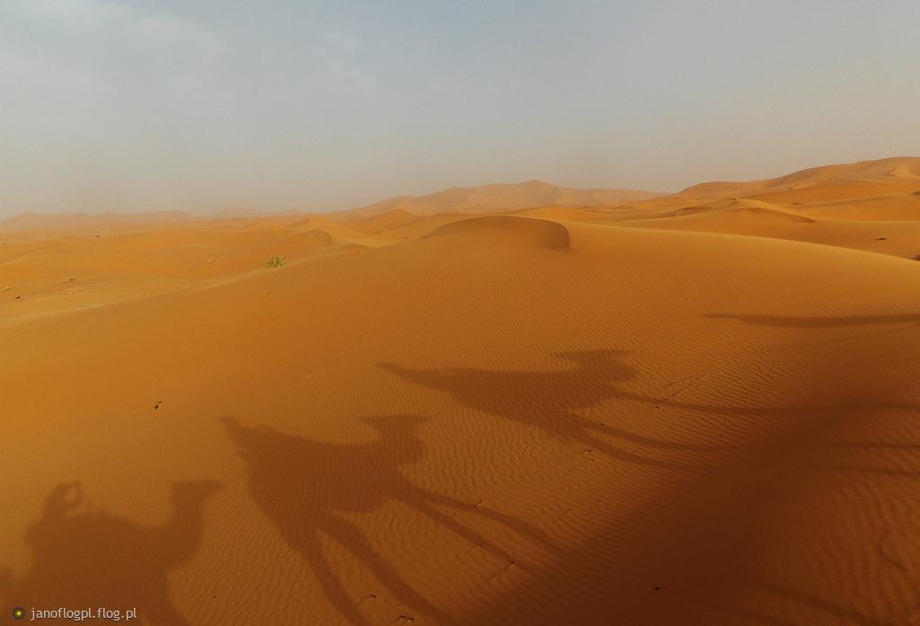 Cienie na piasku