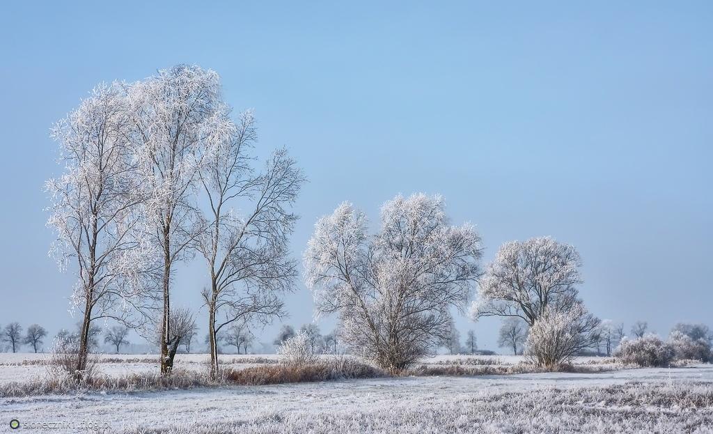 Zima bielą się snuje ...
