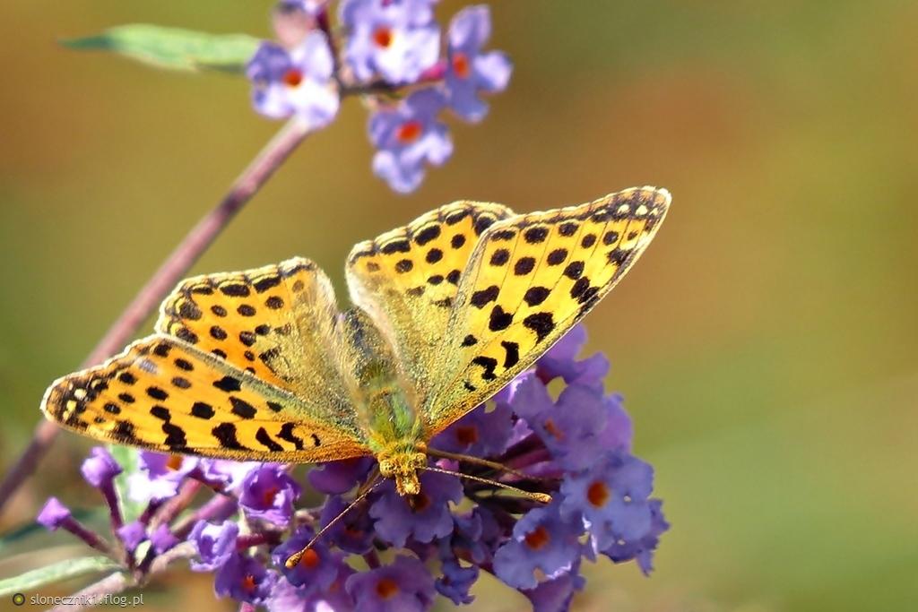 w motylim świecie