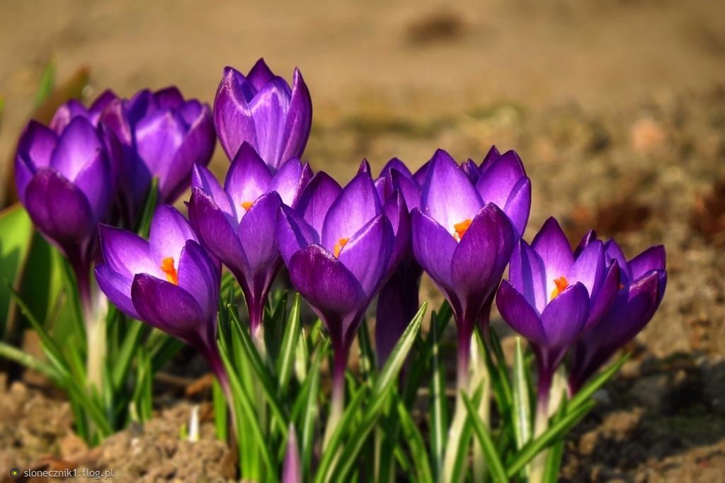 ogrodowe ... dla Was ... na miły dzień