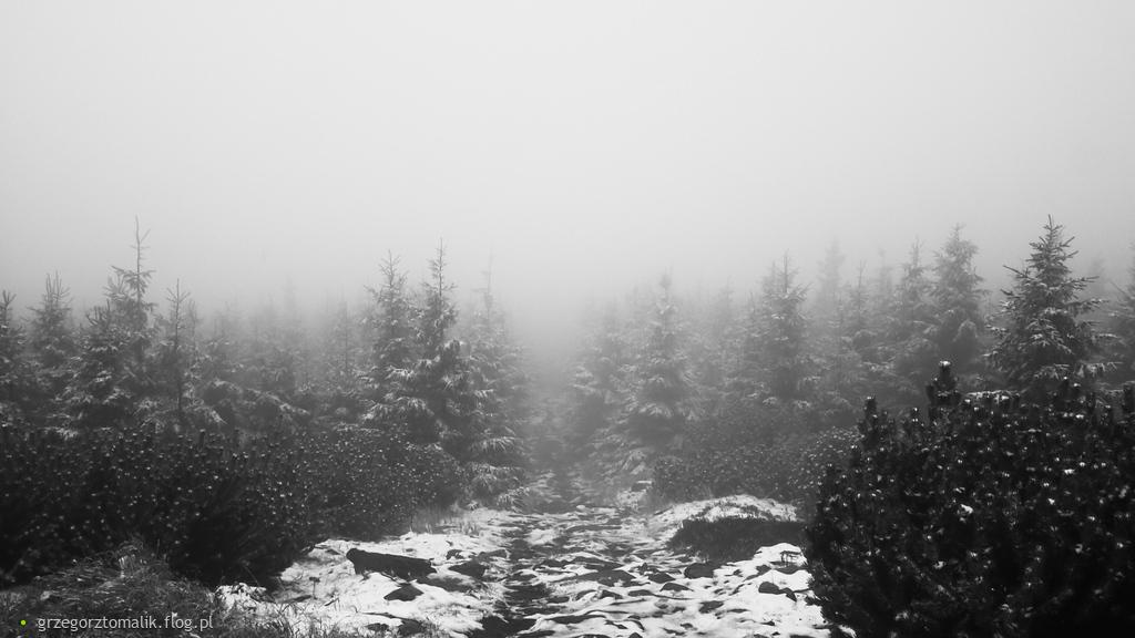 Pożegnanie zimy