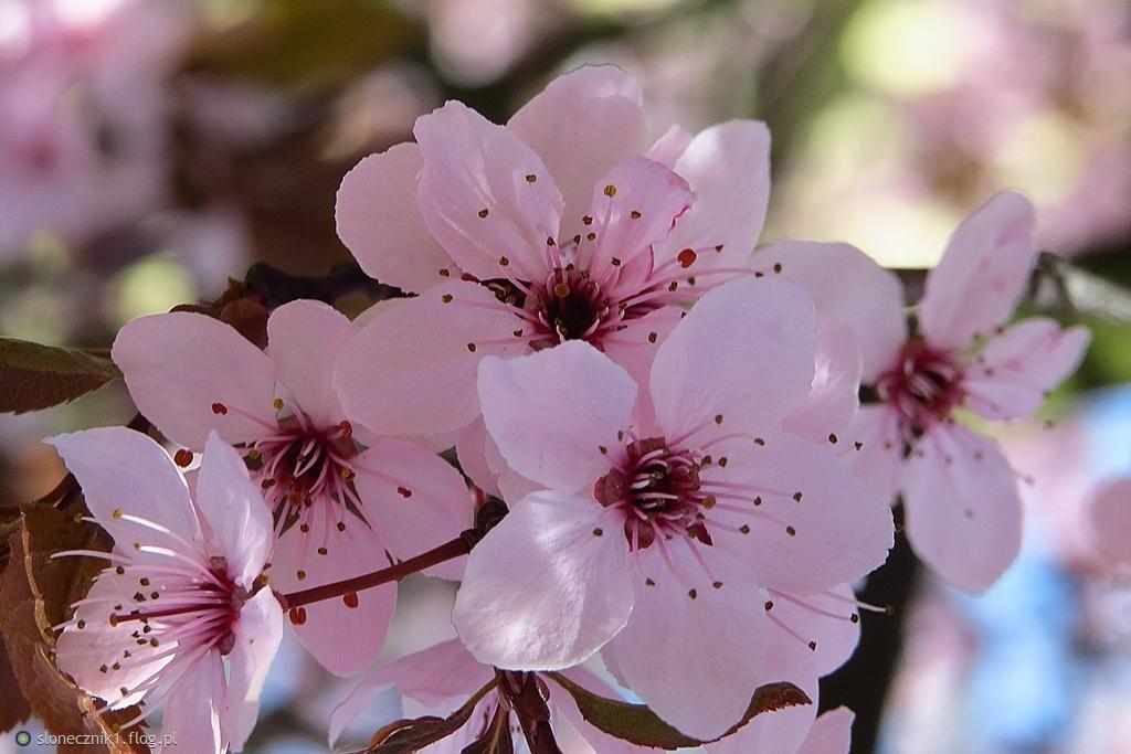 wiosna tu ...  wiosna tam :)