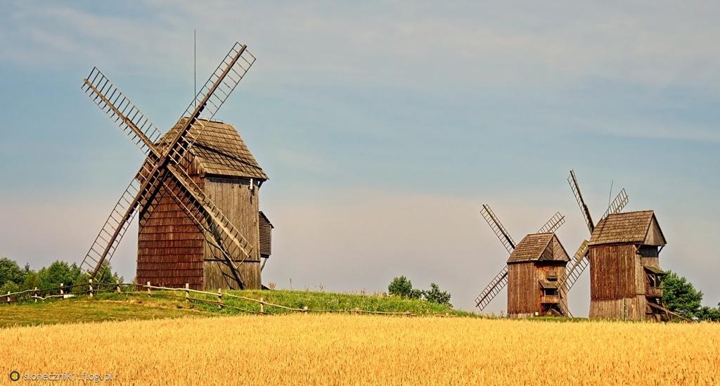 jeszcze w ich skrzydłach żyje wiatr ... wiatraki z Moraczewa