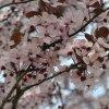 Wiosna w Tychach.