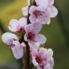 Wiosenne powitanie