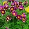 Moje ogrodowe piękności d<br />la Ciebie Beatko:-)