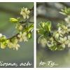 Zapachniało, zajaśniało, <br />wiosna, ach to ty... ::