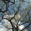 Im dalej w las , tym więc<br />ej drzew, im dalej w czas<br /> tym trudniej iść.Im dale<br />j w czas, tym piękniej je<br />st iść coraz dalej w życi<br />e jak pełen tajemnicy las<br />.