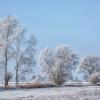 Zima bielą się snuje ... ::  UCICHŁY KORONY DRZEW  Z <br />NIEBA ZNIKŁY CIEPŁOLUBNE <br />PTAKI ZIMA BIELĄ SIĘ SNUJ<br />E MR&amp;Oacute;Z PR
