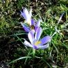 Wiosenne kwiaty z małą ps<br />zczółką.