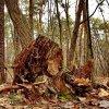 Zapach wilgotnego lasu.
