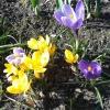 Wiosna dla Ciebie:) Pozdr<br />awiam Serdecznie Wszystki<br />ch Sympatyków Wiosny:)