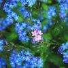 flower :: Muszę się uwolnić, wiem ż<br />e może być inaczej ile si<br />ł w piersiach, dmucham w <br />podarty żagiel .