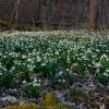 Wiosna w bieli...