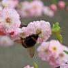 Wiosenna gałązka dla Cieb<br />ie Beatko:-))