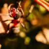 Kolejna odsłona mróweczki<br /> ;)  ::
