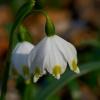 Słodki zapach wiosny...
