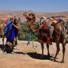 Berber i jego wielbłądy