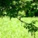 Na gałązce, na zielonej usiadł jakiś ptak...