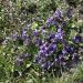 1697. Wiosna w rogowskim Arboretum.